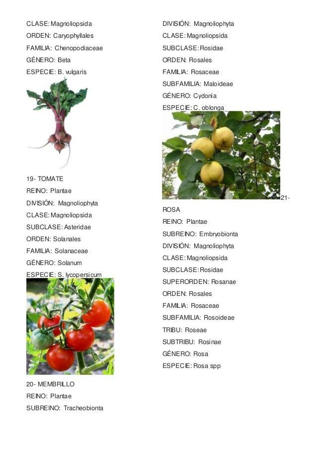 taxonomia de plantas yahoo dating