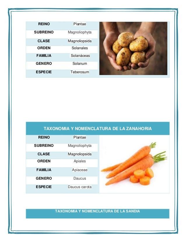 Taxonomia y nomenclatura de los animales y las plantas for La zanahoria es una hortaliza