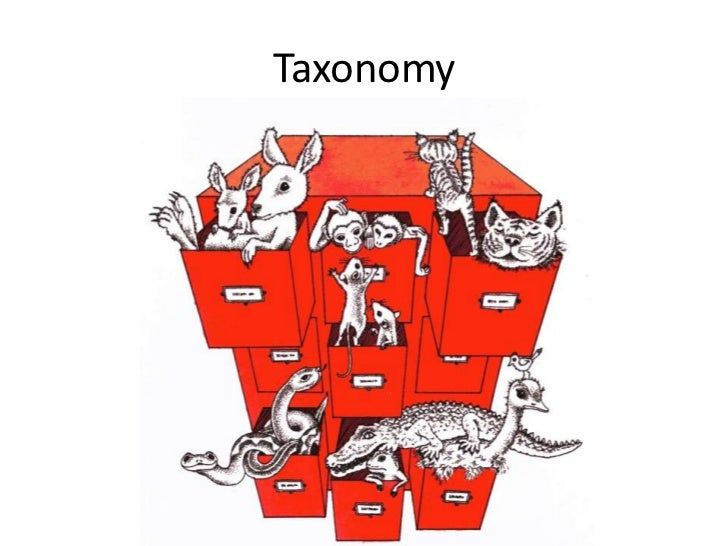 an introduction to the analysis of taxonomy This risk taxonomy technical standard is the first in an initial set of three open group publications addressing risk management following publications will be:  • an introduction to factor analysis of information risk (fair), risk management insight llc, november 2006 refer to: wwwriskmanagementinsightcom.