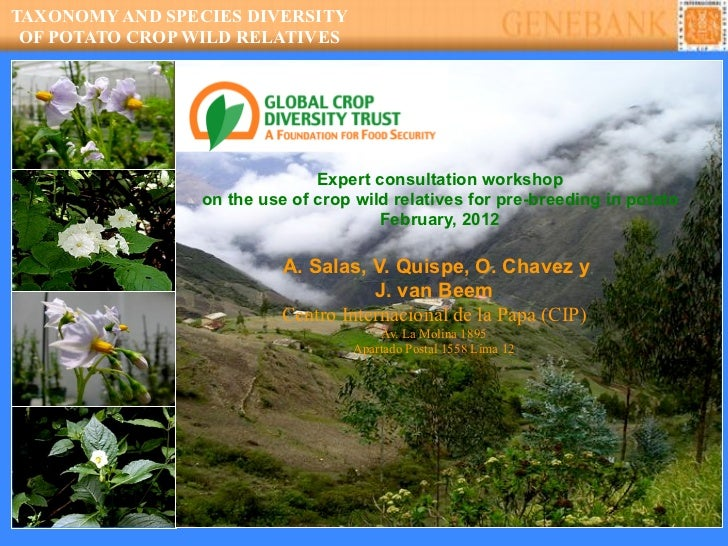TAXONOMY AND SPECIES DIVERSITY OF POTATO CROP WILD RELATIVES                               Expert consultation workshop   ...