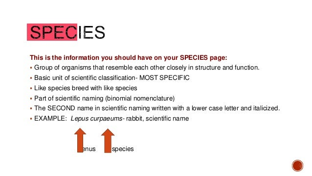 How to Write Scientific Names of Animals