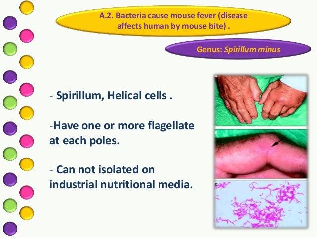 Taxonomy of bacteria