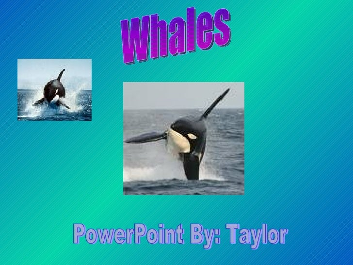 Whales  PowerPoint By: Taylor