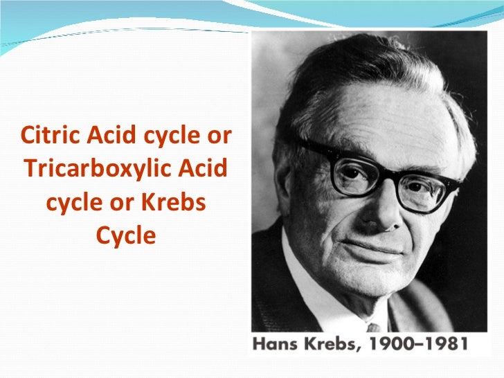 Citric Acid cycle orTricarboxylic Acid  cycle or Krebs        Cycle
