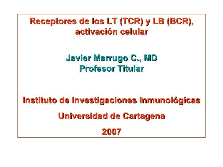 Receptores de los LT (TCR) y LB (BCR), activación celular Javier Marrugo C., MD Profesor Titular Instituto de Investigacio...