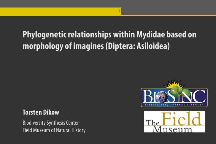 1     Phylogenetic relationships within Mydidae based on morphology of imagines (Diptera: Asiloidea)     Torsten Dikow Bio...
