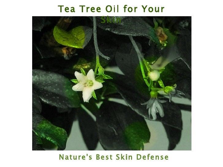 Tea Tree Oil for Your Skin Nature's Best Skin Defense