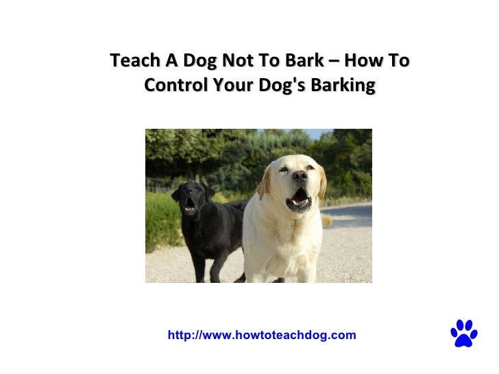 teach a dog not to bark how to control your dog 39 s barking http