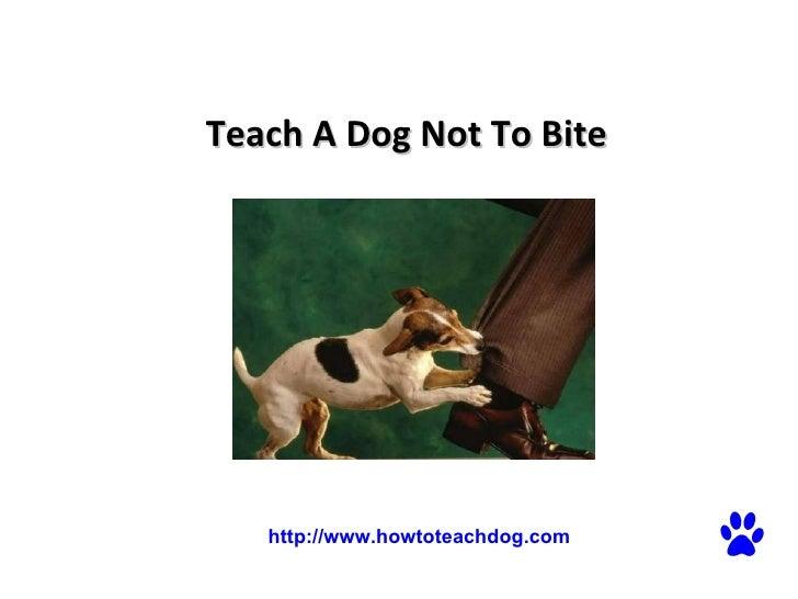 Teach A Dog Not To Bite   http://www.howtoteachdog.com