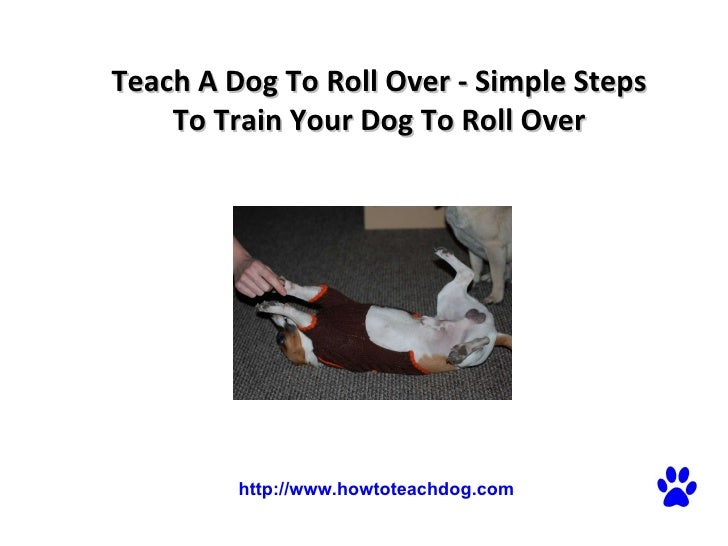 Teach a dog to roll over simple steps to train your dog to roll over