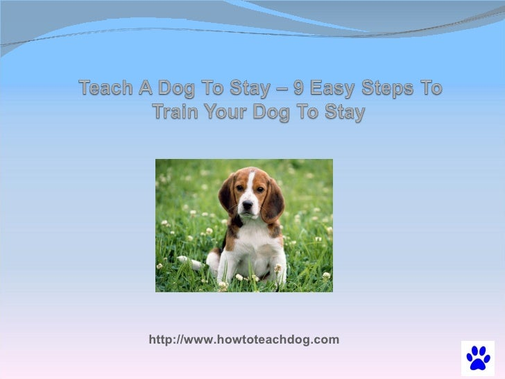 Teach A Dog To Stay – 9 Easy Steps To Train Your Dog To Stay