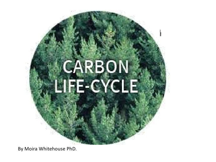 CARBON AND NITROGEN CYCLES (Teach)