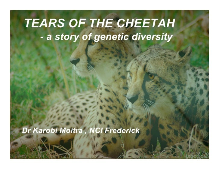TEARS OF THE CHEETAH     - a story of genetic diversity     Dr Karobi Moitra , NCI Frederick