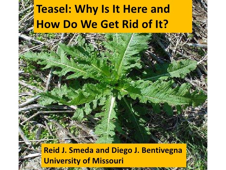 Teasel: Why Is It Here andHow Do We Get Rid of It? Reid J. Smeda and Diego J. Bentivegna University of Missouri