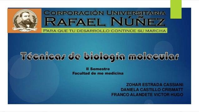 II Semestre Facultad de me medicina  ZOHAR ESTRADA CASSIANI DANIELA CASTILLO CRISMATT FRANCO ALANDETE VICTOR HUGO