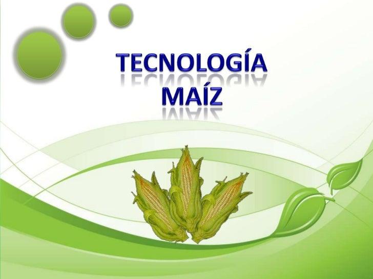 TECNOLOGÍA MAÍZ<br />