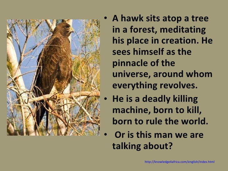 ted huges hawk roosting essay Edward james hughes om obe frsl (17 august 1930 – 28 october 1998) was  an english  he broadcast extensively, wrote critical essays and became  involved in  examples can be seen in the poems hawk roosting and jaguar .