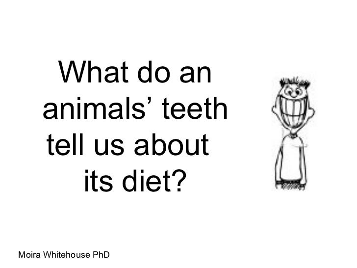 What do an animals ' teeth tell us about  its diet? Moira Whitehouse PhD