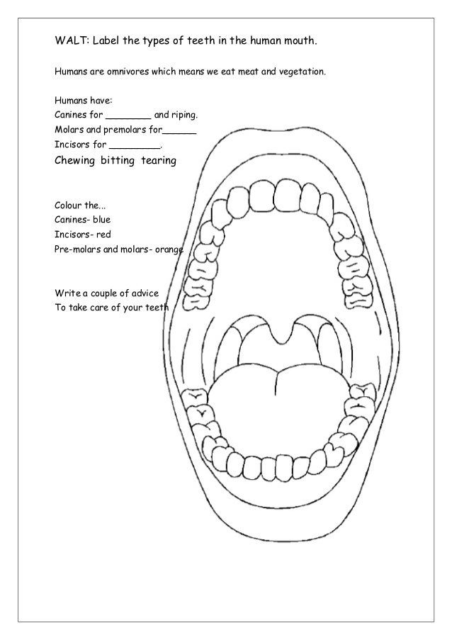 Tooth anatomy worksheet