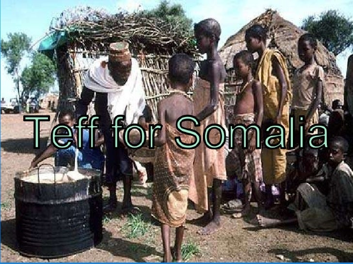 Teff for somalia diego
