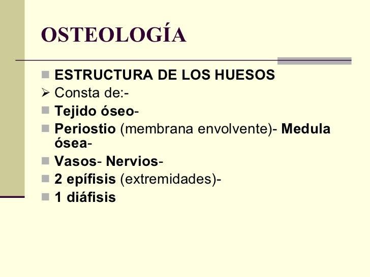 OSTEOLOGÍA <ul><li>ESTRUCTURA DE LOS HUESOS </li></ul><ul><li>Consta de:-  </li></ul><ul><li>Tejido óseo -  </li></ul><ul>...