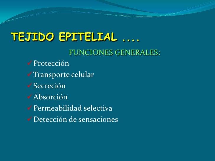 TEJIDO EPITELIAL ....<br />FUNCIONES GENERALES:<br /><ul><li>Protección