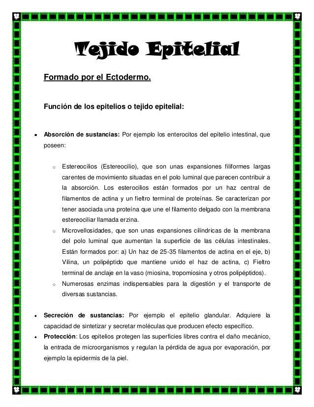 Tejido Epitelial Formado por el Ectodermo.  Función de los epitelios o tejido epitelial:  Absorción de sustancias: Por eje...