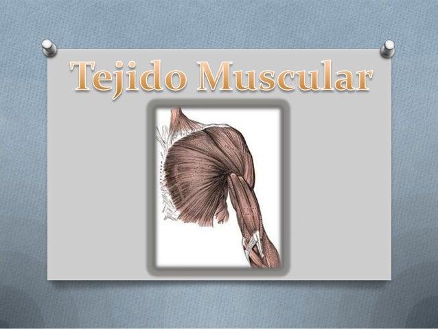 O El Tejido Muscular es un tejido que  compone aproximadamente de 40%  a 45% de masa de los seres  humanos y está especial...