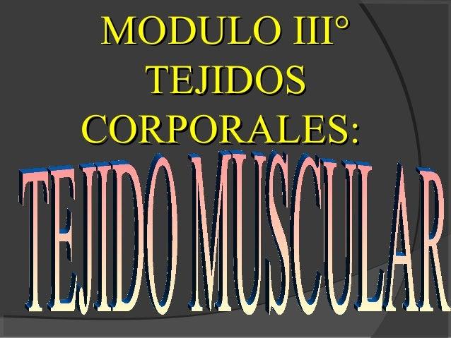 MMOODDUULLOO IIIIII°°  TTEEJJIIDDOOSS  CCOORRPPOORRAALLEESS::
