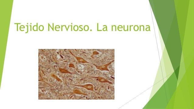 Tejido nervioso. la neurona - Raquel Fernández