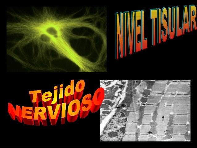 CARACTERÍSTICAS GENERALES DEL TEJIDO NERVIOSO Variedad Uno de los 4 tejidos básicos (epitelial, conectivo, nervioso y musc...