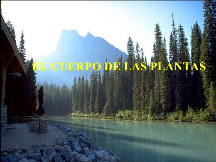 EL CUERPO DE LAS PLANTAS