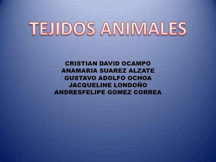 TEJIDOS ANIMALES<br />CRISTIAN DAVID OCAMPO<br />ANAMARIA SUAREZ ALZATE<br />GUSTAVO ADOLFO OCHOA<br />JACQUELINE LONDOÑO<...