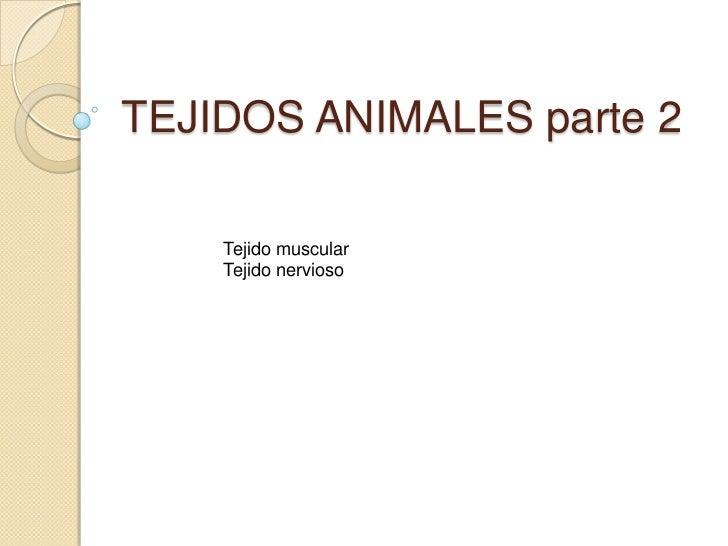 TEJIDOS ANIMALES parte 2    Tejido muscular    Tejido nervioso
