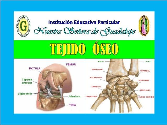 VIII - Unidad : Biología TEMA: TEJIDO ÓSEO I.E.P «Nuestra Señora de Guadalupe» Es uno de los tejidos más rígidos del cuerp...