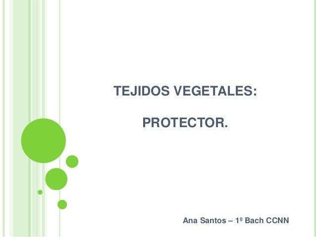 TEJIDOS VEGETALES: PROTECTOR.  Ana Santos – 1º Bach CCNN