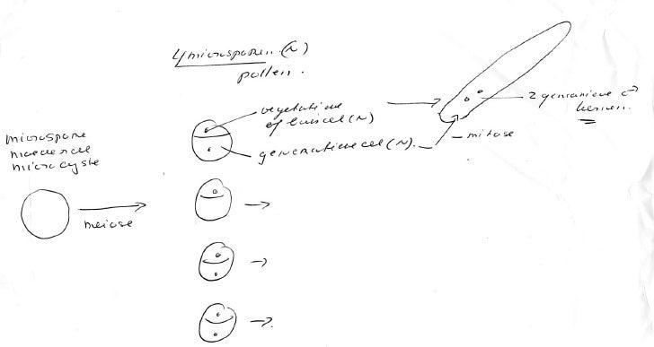 Tekening (2) bij college Plantenrijk (2)
