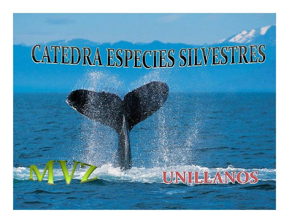 Introducción  El manejo de fauna es algo insipiente en América latina, sin embargo en la actualidad se expande y diversifi...