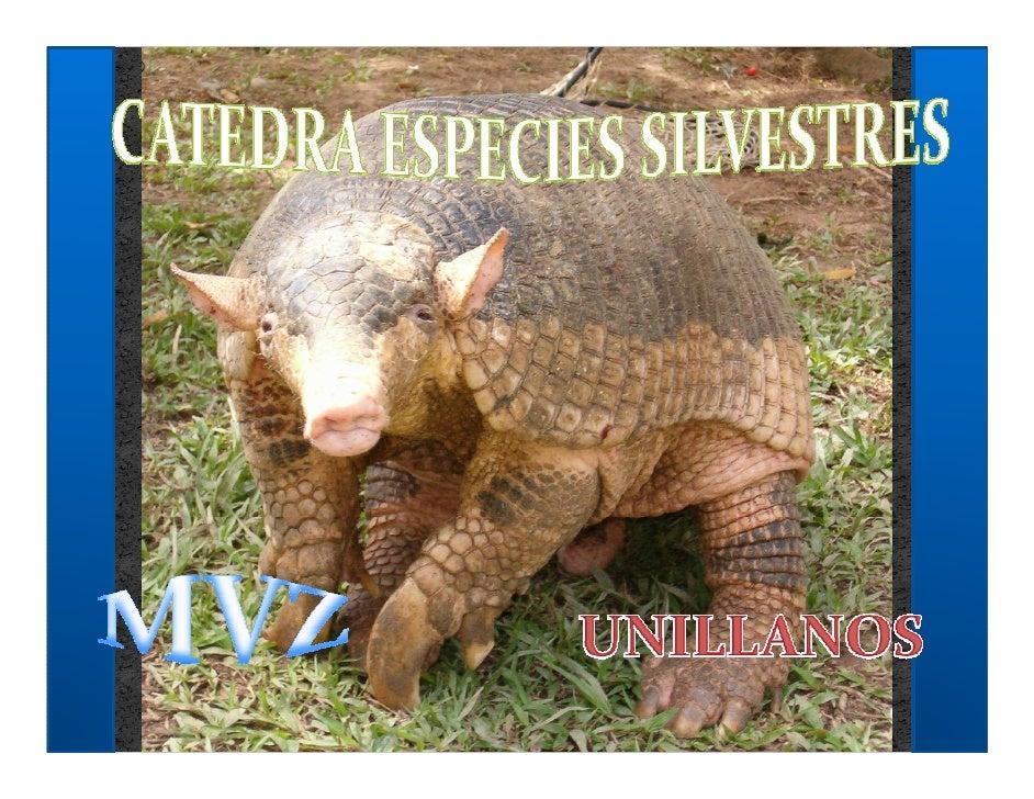 Las parasitosis son normales en estado silvestre debido al equilibrio parasito huésped. Los animales cursan con infestacio...