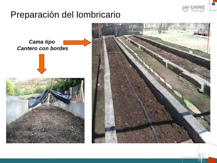 Los parásitos las revocaciones el tratamiento por las hierbas