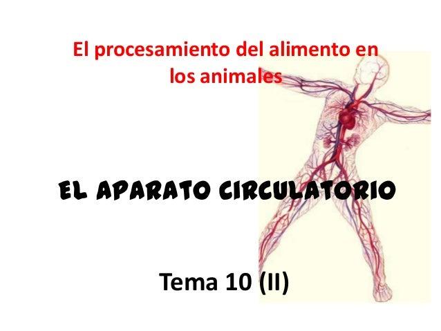 El procesamiento del alimento en           los animalesEl aparato circulatorio          Tema 10 (II)