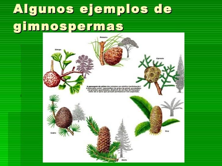 Tema 10 las plantas for Plantas ornamentales ejemplos y nombres