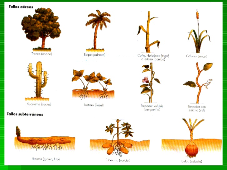 10 tipos De Plantas  Imagui
