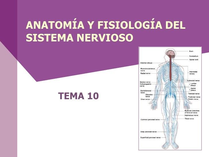 ANATOMÍA Y FISIOLOGÍA DELSISTEMA NERVIOSO     TEMA 10