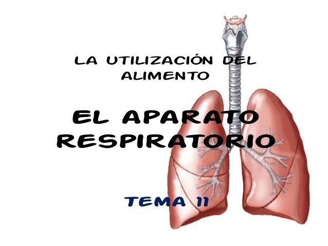 Tema 11 aparato respiratorio