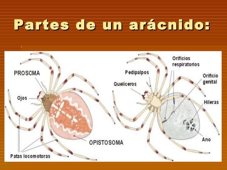 Que análisis es necesario dar en los parásitos