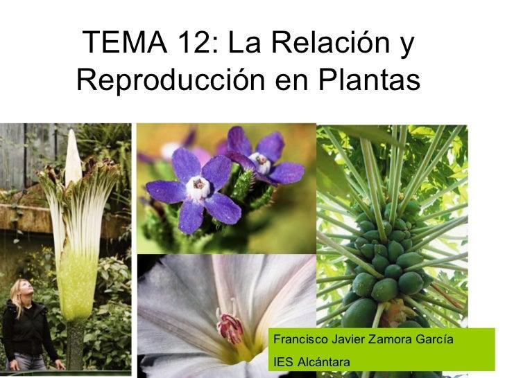 TEMA 12: La Relación yReproducción en Plantas             Francisco Javier Zamora García             IES Alcántara