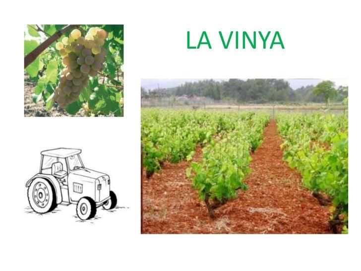 Tema 1 medi la vinya