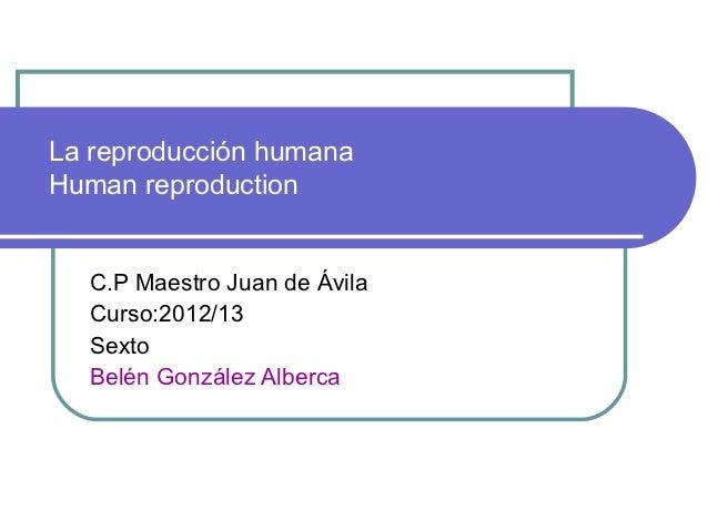 La reproducción humanaHuman reproduction  C.P Maestro Juan de Ávila  Curso:2012/13  Sexto  Belén González Alberca