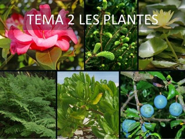 http://es.slideshare.net/jordimuletamengual/tema-2-les-plantes-41318125